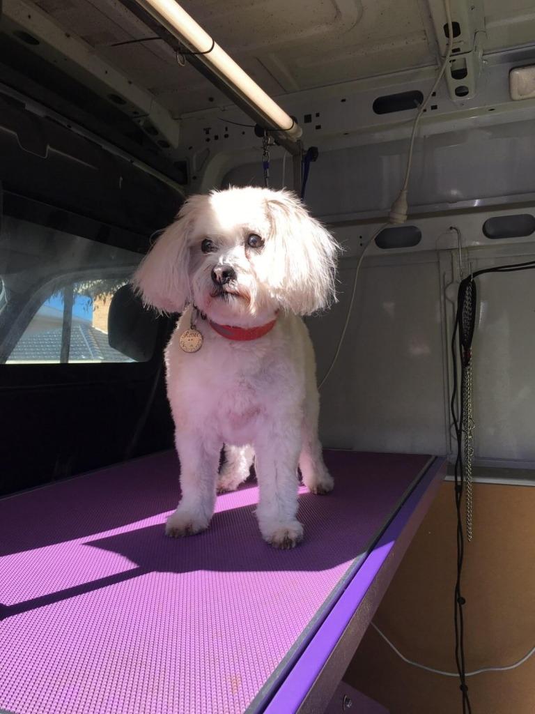 Clean dog in a van